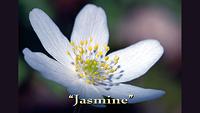 jasmine_sm